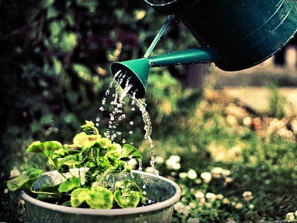 Как да се напоява градината?